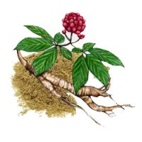 Panax Ginsing Root Extract Ingredient